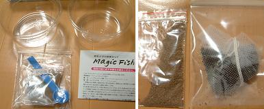 マジックフィッシュ_02