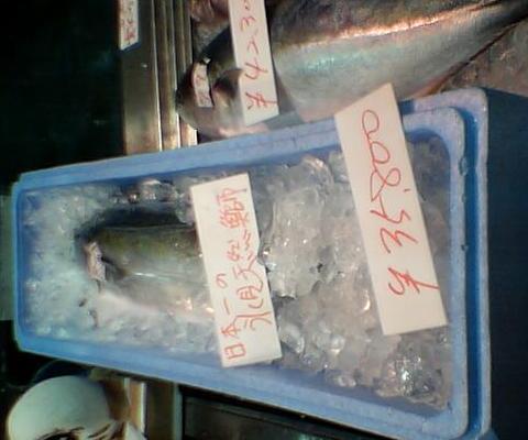 氷見海鮮市場 天然ブリ