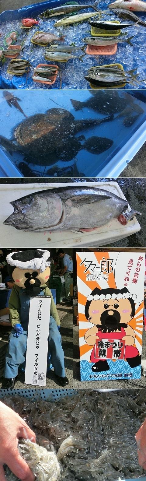 平成28年度 湘南ひらつか魚まつり朝市 1