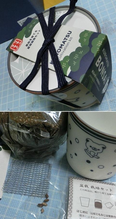 リラックマ 黒松を育てる盆栽栽培セット