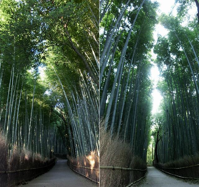 京都 嵯峨嵐山 竹林の道