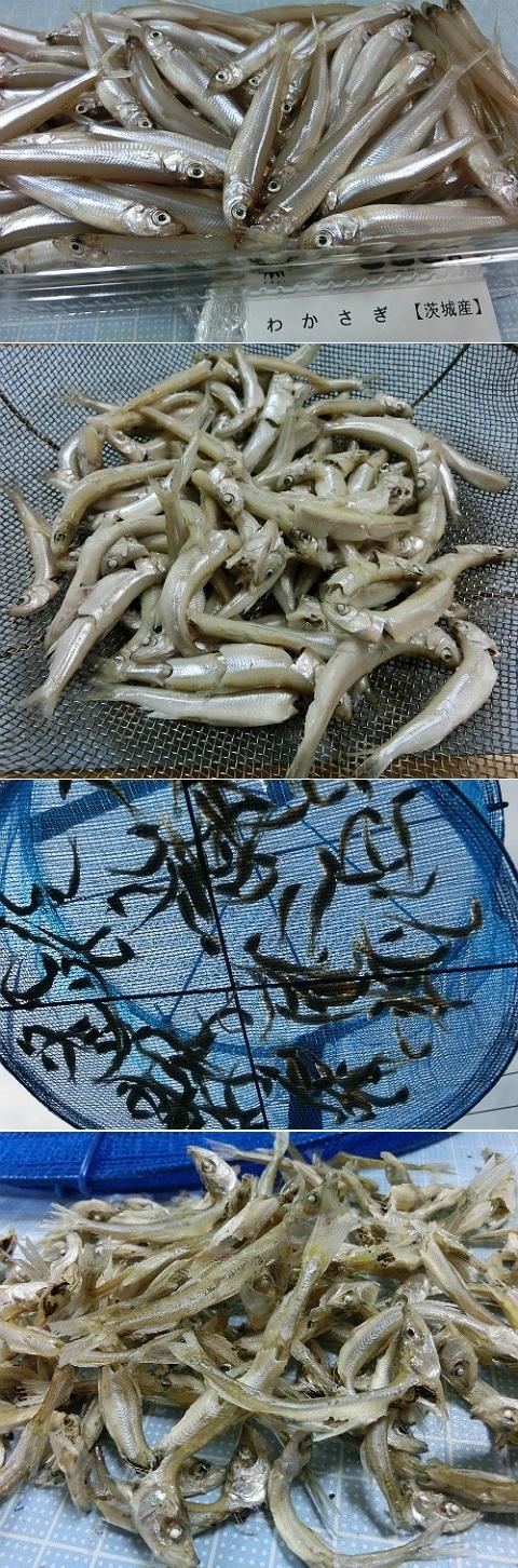 茨城産ワカサギでクサガメ用の煮干を作ってみた