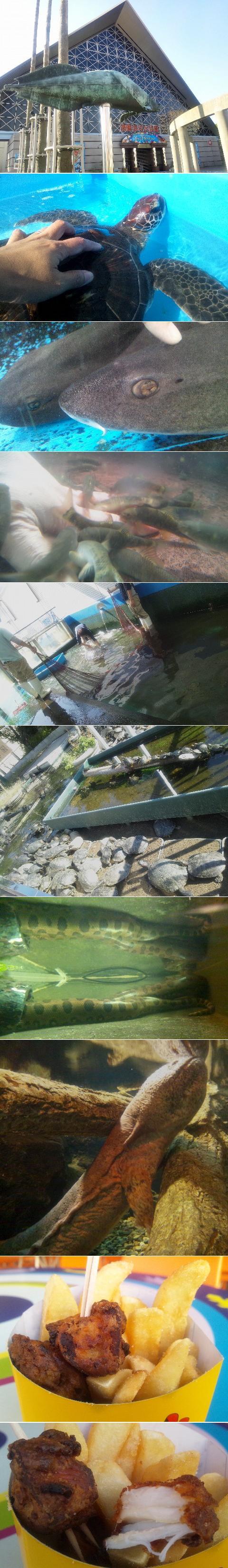 須磨海浜水族園(スマスイ)