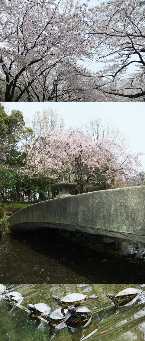 お花見 in平塚市総合公園 2013