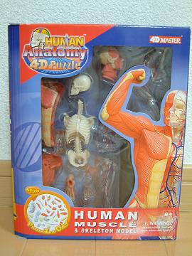 HUMAN_MUSCLE_01