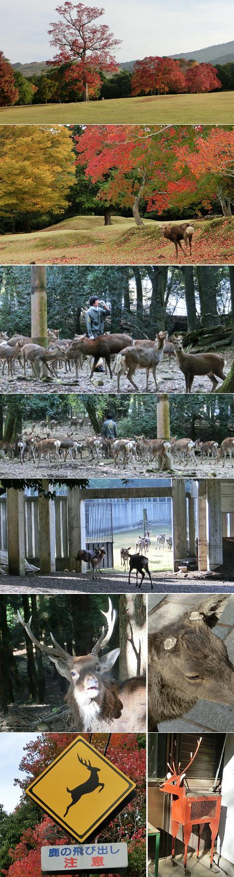 奈良公園周辺 飛火野〜