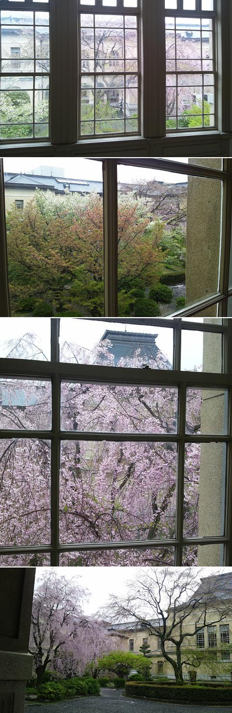 京都府庁旧本館 観桜会 祇園枝垂桜 容保桜