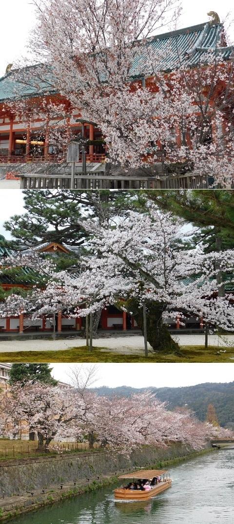 桜 2020年 @平安神宮・琵琶湖疎水