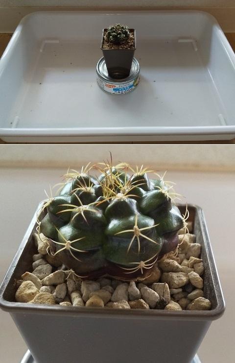 DSC_Cactus-after_sara.jpg