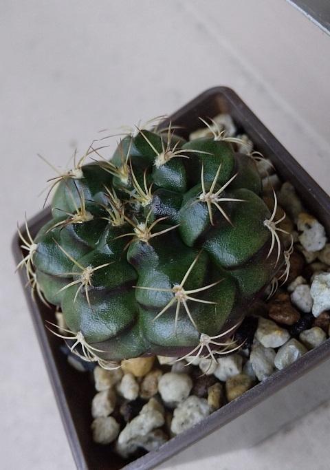 DSC_cactus-outside.jpg